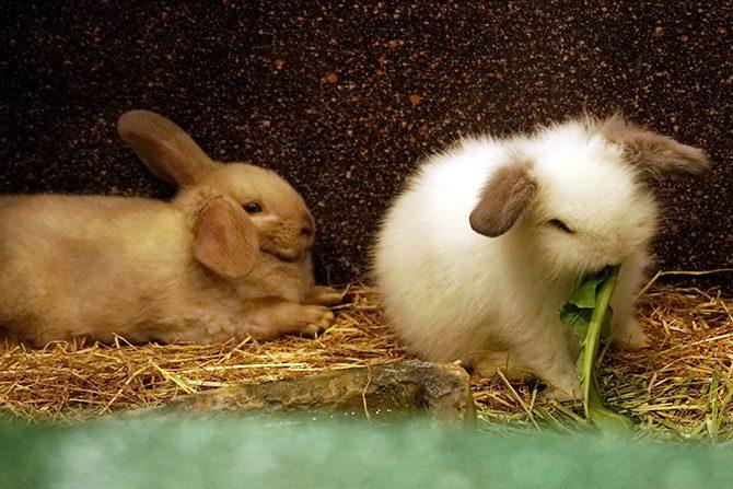 ペット供養・ペット関連グッズの展示会3