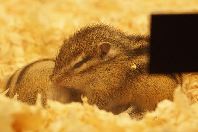 ペット供養・ペット関連グッズの展示会4