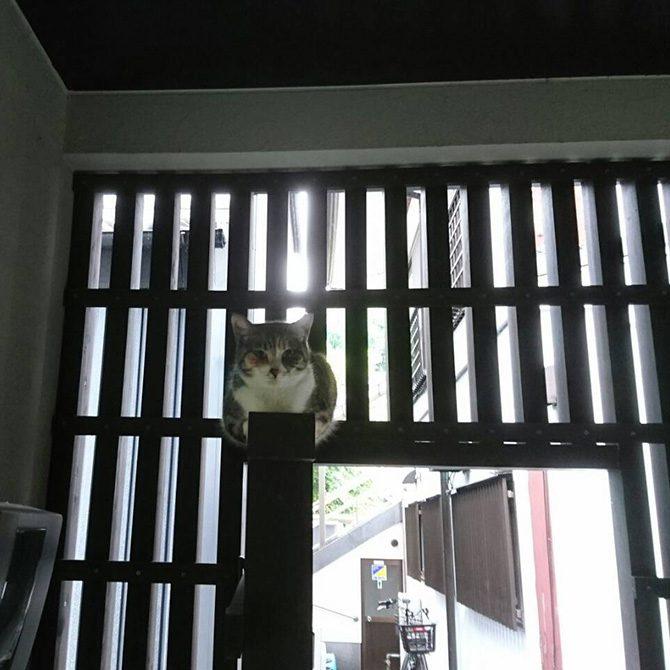 ペット霊園内でくつろぐ地域猫たち1