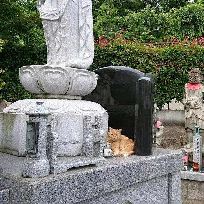 ペット霊園内でくつろぐ地域猫たち3