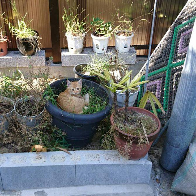 ペット霊園内でくつろぐ地域猫たち4