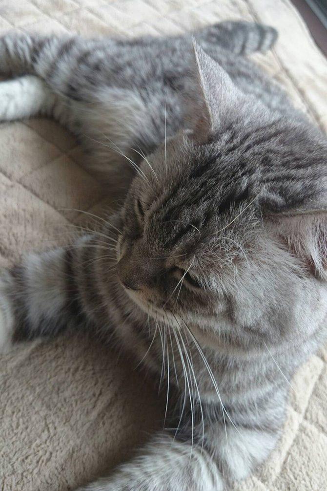 ペット霊園内で居眠りを楽しむ地域猫たち2