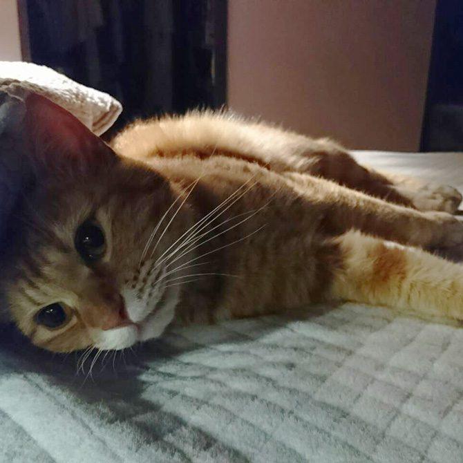 ペット霊園内で居眠りを楽しむ地域猫たち3