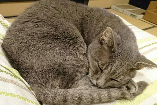 茨城県水戸市での動物虐待について
