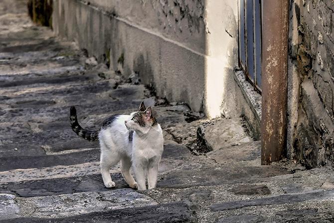 ニュースで取り上げられていた広島県での地域猫活動のご紹介。