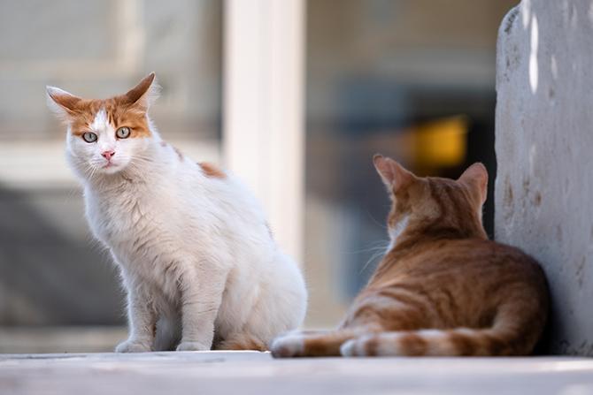 保護猫活動の一環でTNRをおこないました。