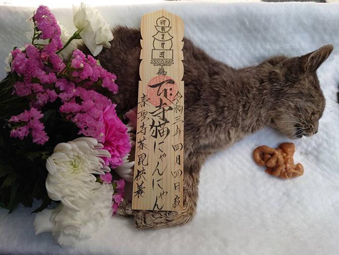 寺猫の『にゃんにゃん』3
